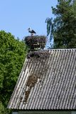 White stork in his nest. On the top of the building roof, Podlasie, Poland Royalty Free Stock Photography