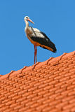 White stork on house roof Royalty Free Stock Image