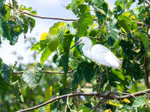 The white stork is hunting in the jungle. stock photo