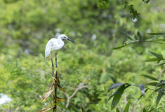 The white stork is hunting in the jungle. stock image