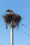 White stork in nest high on pole Stock Images