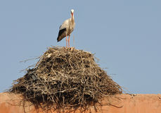 White Stork in Marrakech Royalty Free Stock Image