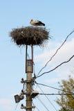 White stork into the nest Stock Image