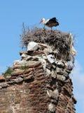 White stork into the nest Royalty Free Stock Photo