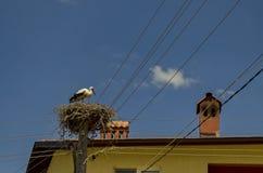 White stork and nest in Belchin village Stock Photo