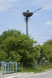 White Stork in the nest on electric pole Stock Photos