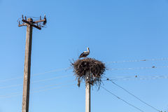 White stork in nest high on pole Royalty Free Stock Photos