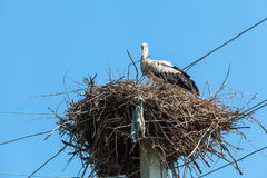 White stork in nest high on pole Stock Photos