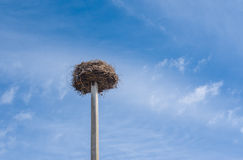 White stork nest Royalty Free Stock Photos