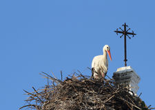White Stork Nesting on a Church in Chiclana de la Frontera, Spai Stock Image