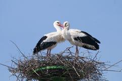White Stork On Nest Stock Image
