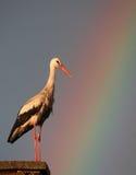 White Stork with rainbow Royalty Free Stock Image
