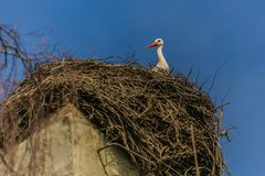 A white stork with red beak sitting on nest. Made of little brown twigs placed on grey chimney, sunny spring day, bright blue sky stock images