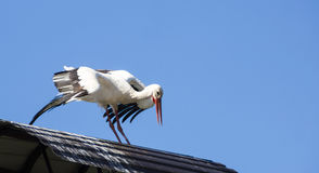 White stork on roof Royalty Free Stock Image