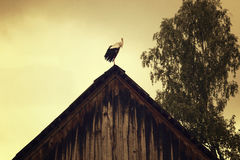 White stork on the roof of a building Stock Photography