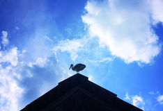 White stork on the roof Stock Images