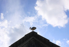 White stork on the roof Stock Photography