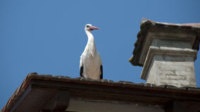 White stork on the roof Stock Image