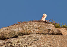 White Stork at it´s rocky nest Royalty Free Stock Photography