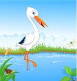 White stork searching food Stock Image