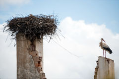 White stork sitting on top of building wall Royalty Free Stock Photo