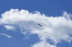 White stork soars having spread wings. Stork soars having spread wings against the background of the blue sky Stock Image