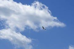 White stork soars having spread wings. Stork soars having spread wings against the background of the blue sky Stock Photo