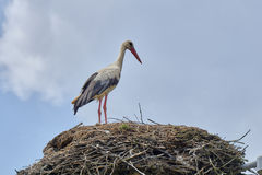 The white stork standing on nest Royalty Free Stock Photos
