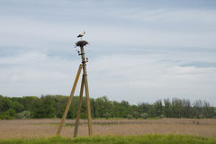 White stork standing in the nest. Royalty Free Stock Image