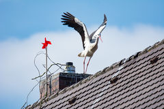 White stork starts flying from house roof Stock Photos