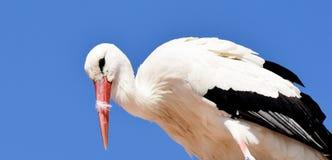 White Stork, Stork, Bird, Beak stock photo