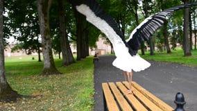 White Stork strolling stock video