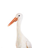 White Stork on white. Stock Photography