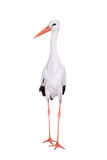 White Stork on white. Stock Images