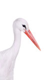 White Stork on white. Royalty Free Stock Photos