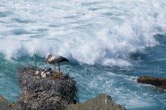 Free White Storks Stock Image - 35633001