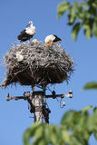 White storks in nest Stock Photos