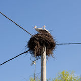 The White Storks on the nest Royalty Free Stock Photos