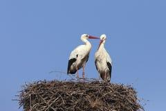 White storks on nest Royalty Free Stock Images