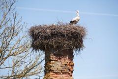 White storks in nest Stock Photo