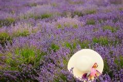 White straw female hat in a lavender field. White straw female hat on the bushes of blooming lavender in a lavender field stock images