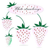 White strawberry Royalty Free Stock Image
