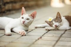 White stray cat laying on pavement, looking curious, another one sleeping in background stock images