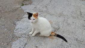 White stray cat. Stray cat in the street Royalty Free Stock Photos
