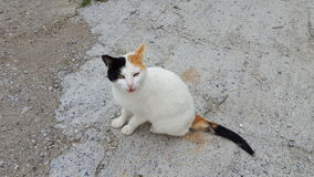 White stray cat. In the streets of Crete Royalty Free Stock Photos