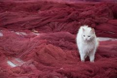 A white stray cat walks on a red fisherman`s net stock images