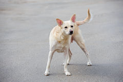 White stray dog Stock Photo