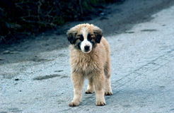 White stray dog Stock Photography