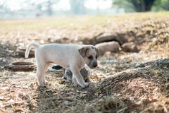 White stray dogs are hungry royalty free stock images
