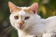 White Street cat - closeup Stock Image